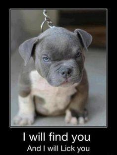 anim, funny dogs, bulldog puppies, puppy face, funny dog pics