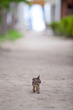 little kitty big world