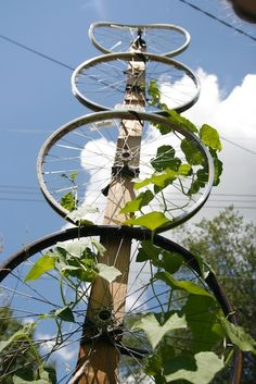 Attach broken bicycle wheels to a wooden post to create a plant trellis for the garden.