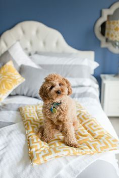 cutest pup + dog bed!
