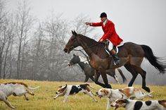 I'd like to travel the world fox hunting.
