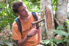 amazon rainforest, wast problem, food brainfood, eat fungi, brain food