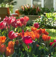 Work a little magic in your fall flower bed, and plant spring-flowering bulbs. When the warm weather returns, those homely bulbs will explode with blooms. It's so easy--click here to learn more!