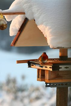 Sweet Shelter from Snow!