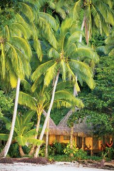 Beach cottages fiji