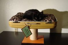 cat beds made from old suitcases