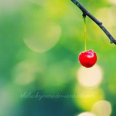 lone cherry...