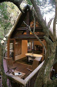 Indoor plumbing in a tree.