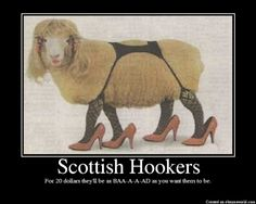 laugh, funny pictures, texa, funni, heel, demotivational posters, sheep, lamb, people