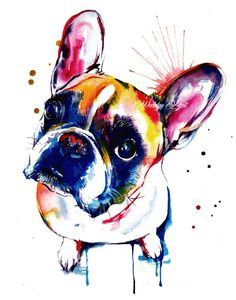 French Bulldog Frenc
