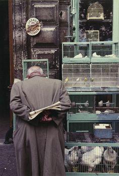 Bird market, Paris.