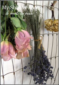 Old wire fencing mounted on the wall to hold (and display) drying flowers - posted by My Shabby Roses