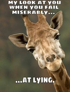 Giraffe meme coffee - photo#10