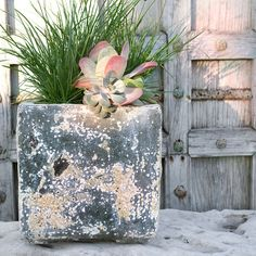 A simple succulent in grass. The Barnacle Cube Pot #shopterrain