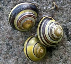 Snails from S is for Snail