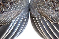 ruffed grouse wings (mary jo hoffman)
