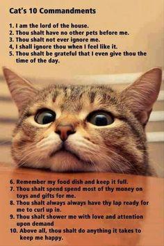 Cat's 10 Commandments