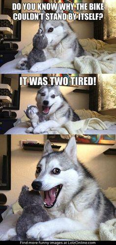 Husky, You Are PUNishing Us