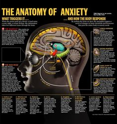 anatomy of anxiety.