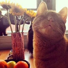 Dillon The Blind Cat