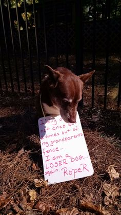 Dog Shame | I dug on…not once but 2 times out of my...