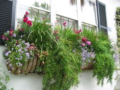 Love the ferns spilling over in this window box garden