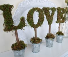 Moss letters in tins
