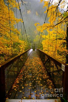 Autumn Bridge to the unknown (taken at Eagle Creek?)