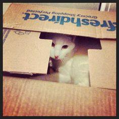 """FreshDirect brought us a cat!"" cat"
