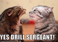 Anything you say, Drill Sergeant! This really takes me back...