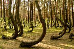 Gryfino Trees, Poland