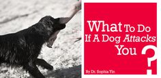 What To DO If A Dog Attacks You?
