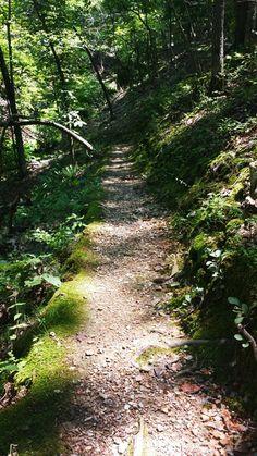 Shaddox Hollow Trail in Rogers, AR