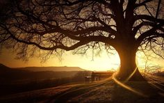 Google Image Result for http://www.natanieldp.com/wp-content/uploads/2011/11/sunset-glow-trees-beautiful-scenery-images.jpg
