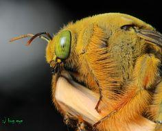 Bumblebee in HD!