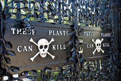 This garden can kill: meet the residents of England's infamous Poison Garden