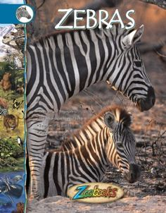 Zebras - Zoobooks at theBIGzoo.com, a family-owned toy store.