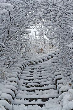 Snow Stairs, Alberta, Canada♌.•*♔*