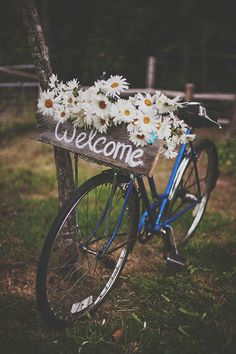 wedding flowers daisies, bicycles, retro bike, farm weddings ideas, weddings with daisies, flower baskets diy, wedding bike, garden, bicycle wedding ideas