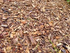 Mulch flower and bulb beds after the ground freezes, to prevent injury to plants from frost heaving.