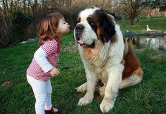 st bernards, a kiss, first kiss, kid pictures, pucker up, pet photos, friend, dog breeds, big dogs