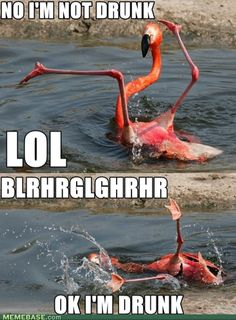 Drunk flamingo is very drunk.