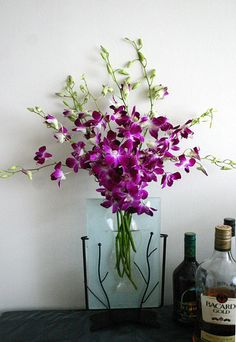 Purple Orchid ❤