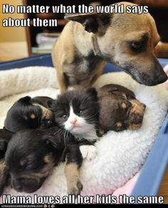 Funny Baby Pictures with Captions | ... adopted - Loldogs n Cute Puppies - funny dog pictures - Cheezburger