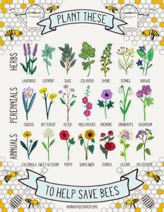 Bee friendly plants, Hannah Rosengren on 'growourown.blogspot.com' ~an allotment blog