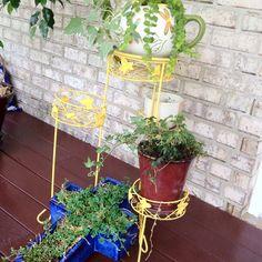 Front porch gardening.