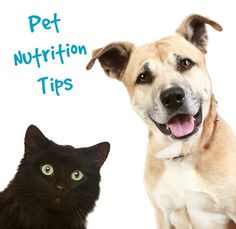 Make sure your pet is eating as healthy as you are with these pet nutrition tips! | via @Fit Bottomed Girls