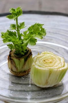 Regrow celery from the stalk