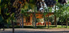 Algodon Wine Estates. San Rafael, Argentina. Best Luxury Hotel Deals