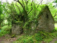 green-house paths, ireland, stone cottag, nature, tree houses, cottages, places, abandoned houses, stone houses